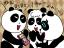3706 Hi-Leg Panda/A doting aunt  13,Feb,2013